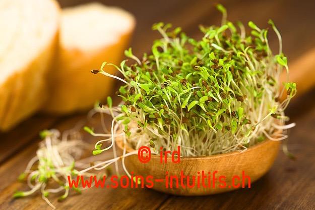 Les graines germées