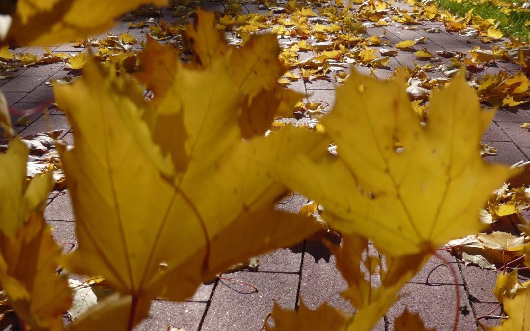 L'automne et ses belles couleurs